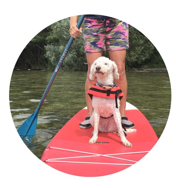 Schwimmweste für den Hund - Der Hund sollte zur Sicherheit immer eine Schwimmweste tragen. Foto: Rosi von ERNL Hundetaschen
