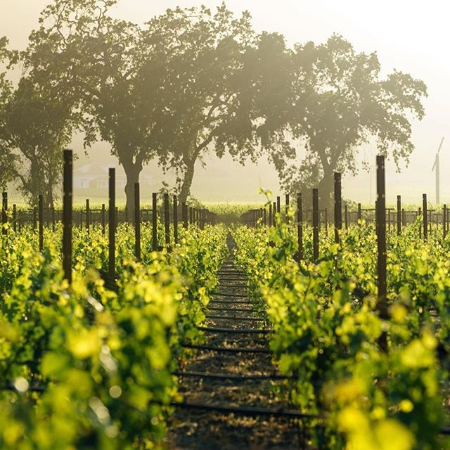 Those perfect moments we all look forward to when in Napa Valley! ☀️🍇☀️ 🍷🍷🍷 ☀️🍇☀️ 🍷🍷🍷 #winery #winelover #vino #wine #winetasting #vineyard #winetime #instawine #vin #wines #goldenhour #wineoclock 📷:@norcal_karen