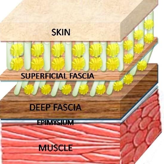 skin.jpg