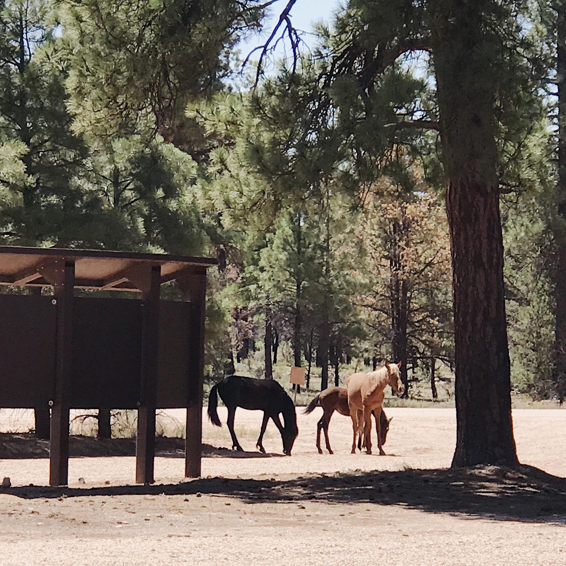 Horse Family.JPG