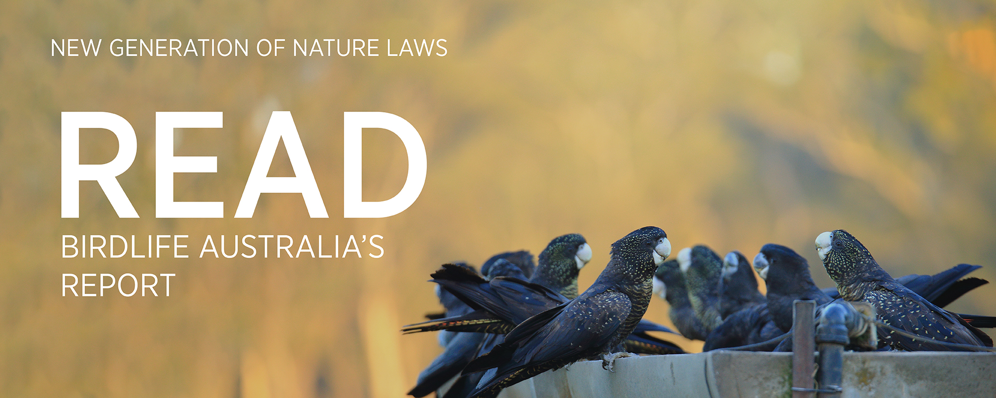 Our report explains how we can fix Australia's broken environment laws, and how those laws are currently failing our most endangered birds.