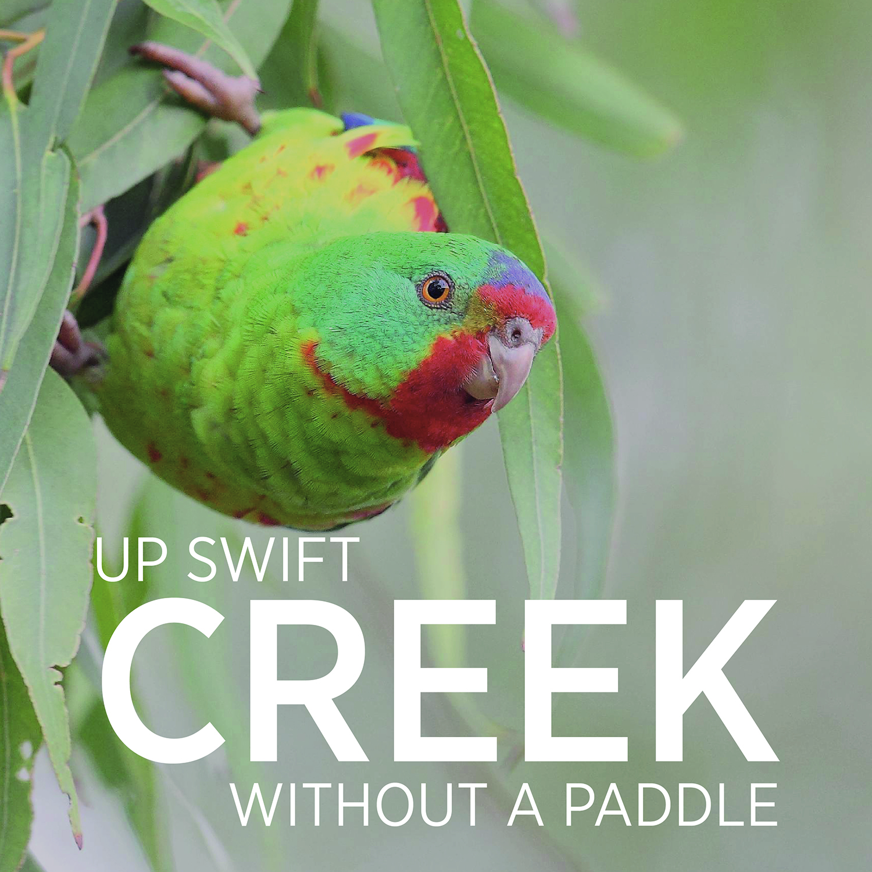 up swift creek square 2.jpg