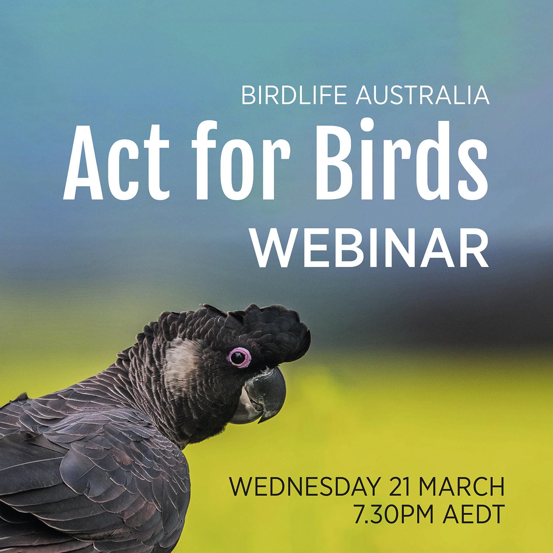 Act for birds webinar 2.jpg