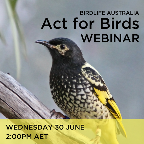 Act for Birds webinar RHE.png