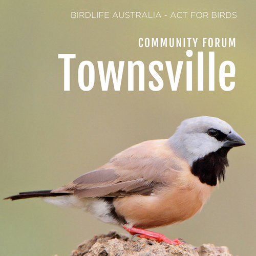 Act for Birds (3).png