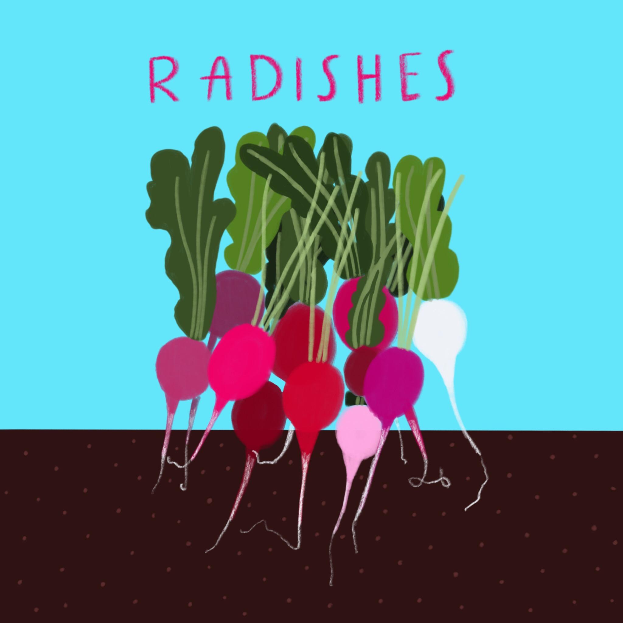 20_-_Radishes.jpg