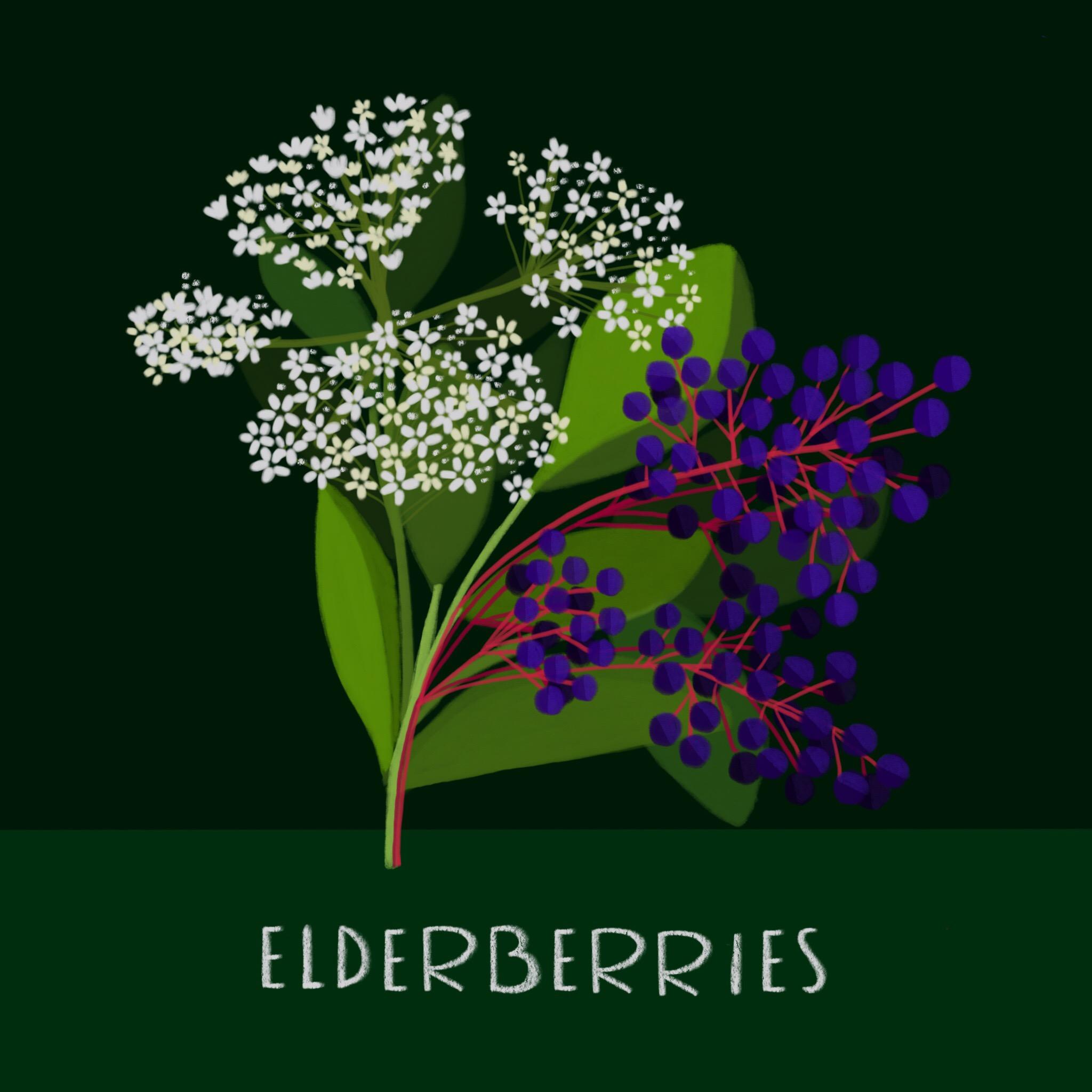 25_-_Elderberries.jpg