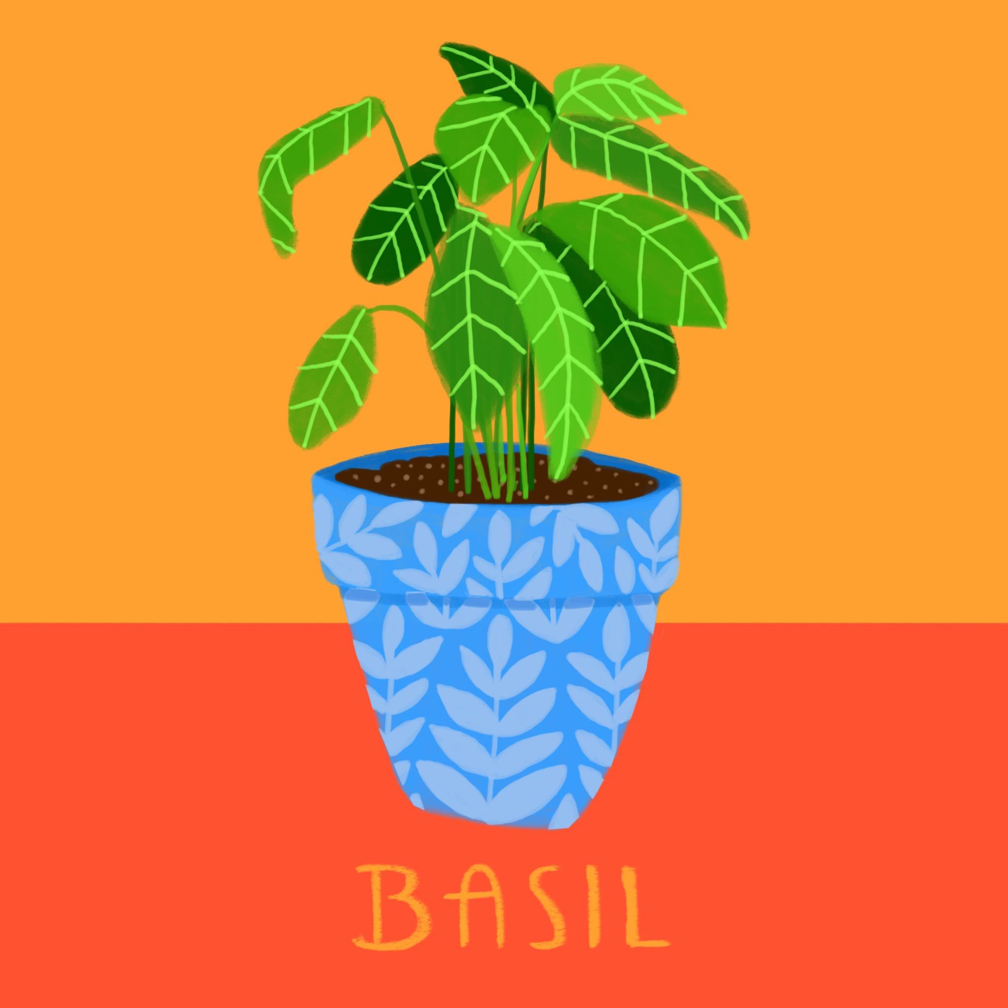 31_-_Basil.jpg