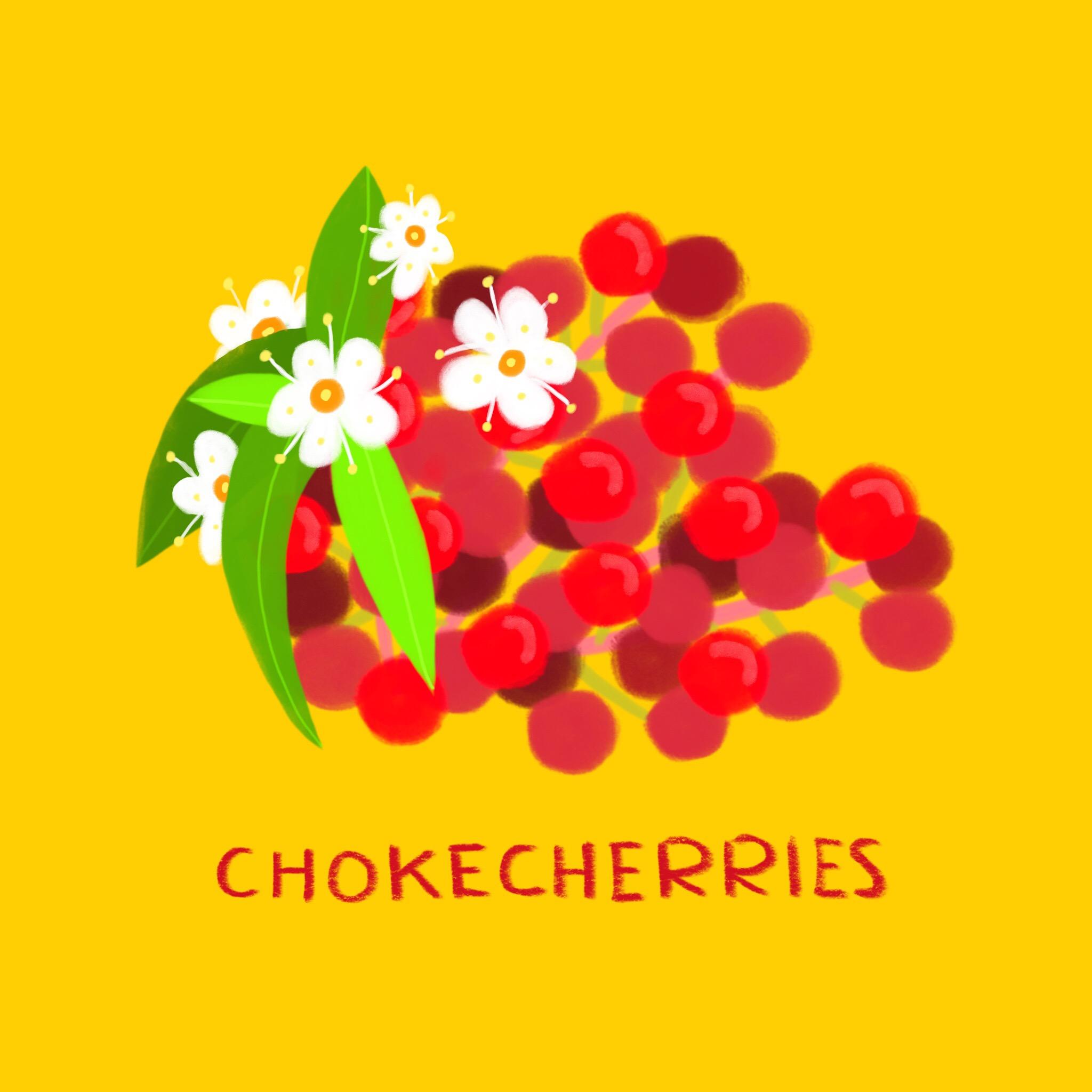 59_-_Chokecherries.jpg