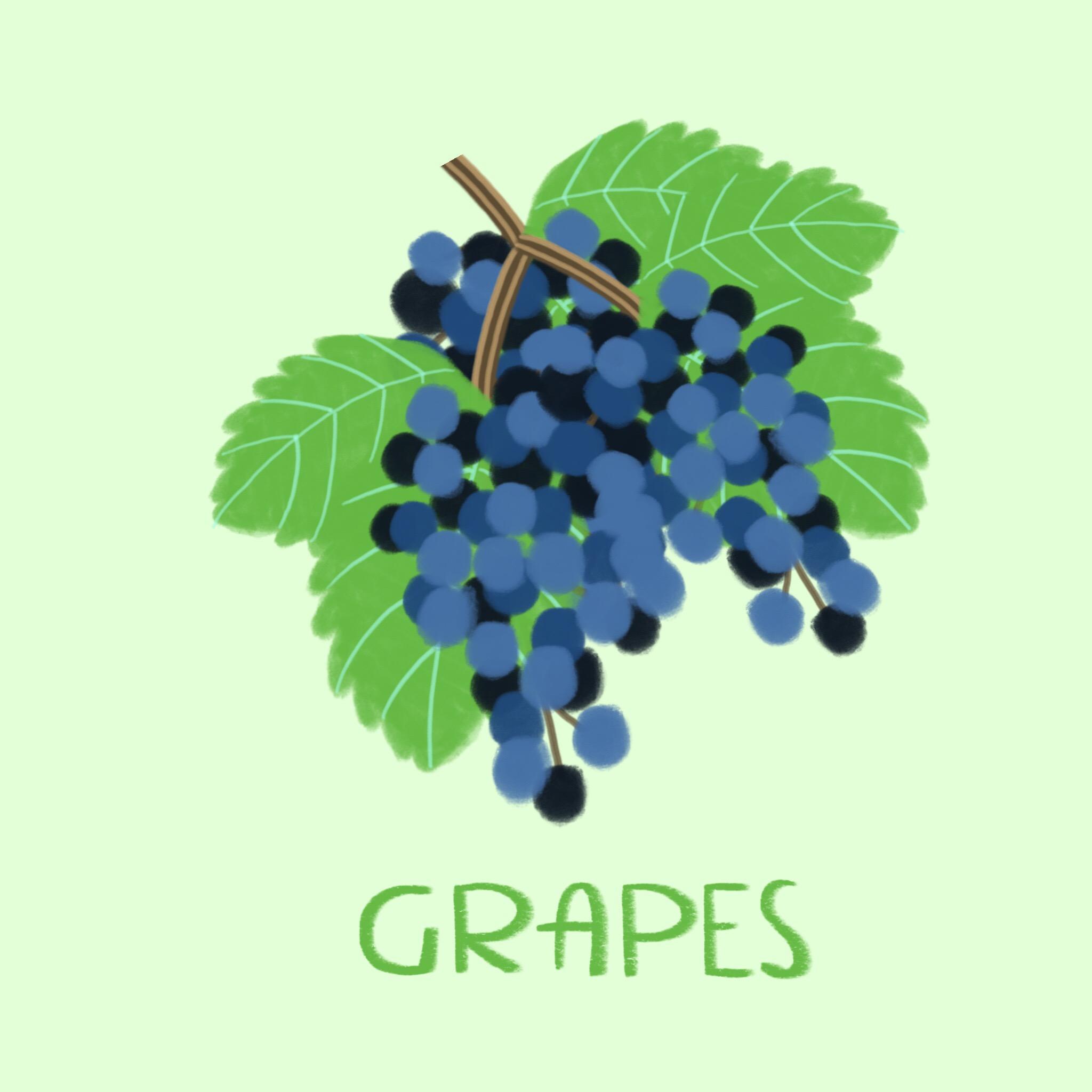 73_-_Grapes (1).jpg
