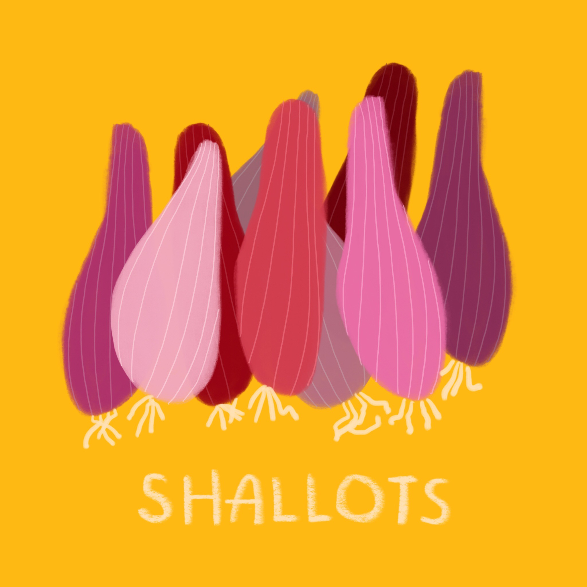 74_-_Shallots.jpg