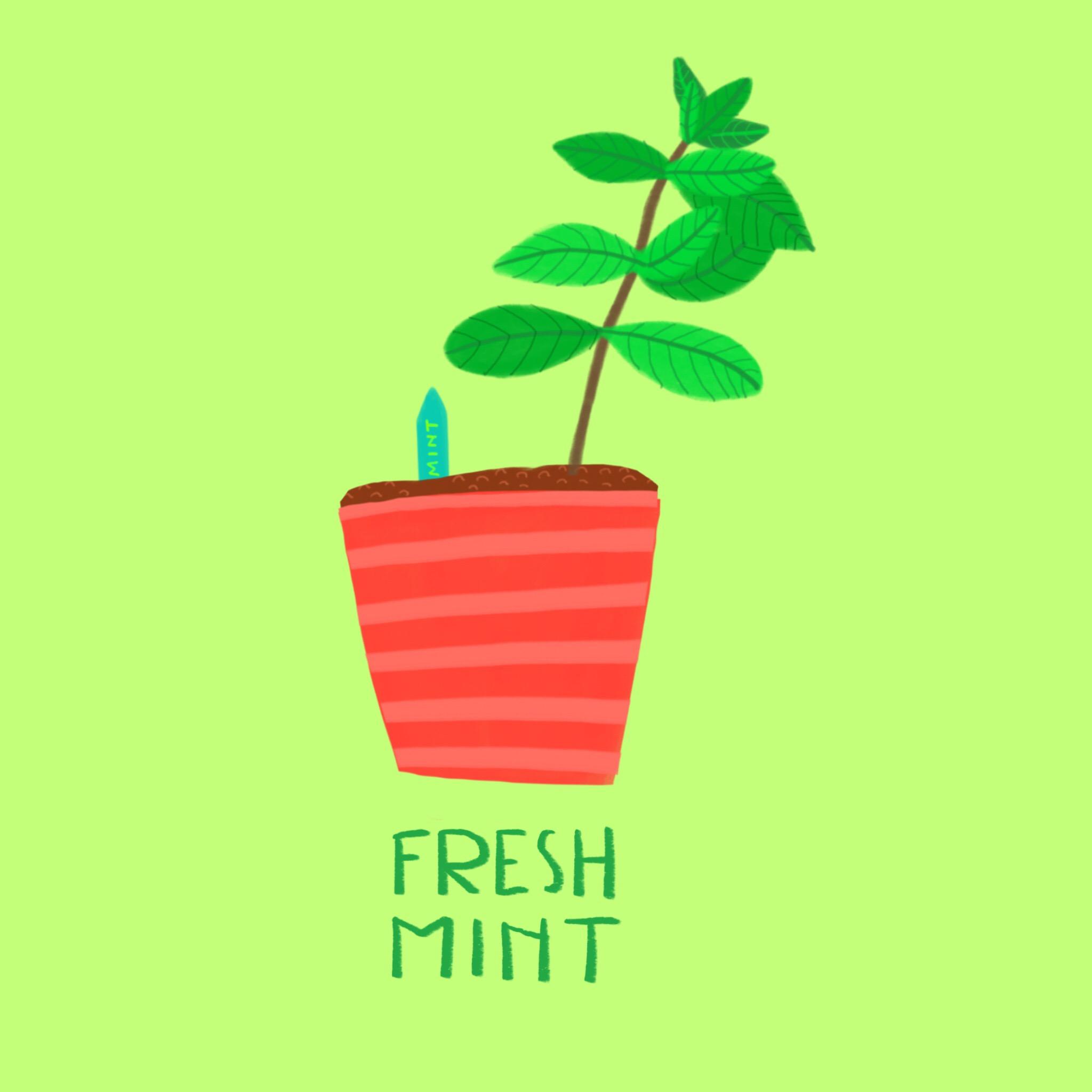 82_-_Mint_.jpg