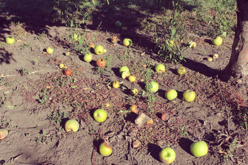 october apple picking