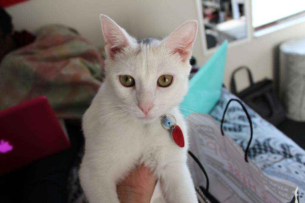 mila the cat