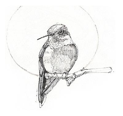 sketches_0001_hummer.jpg