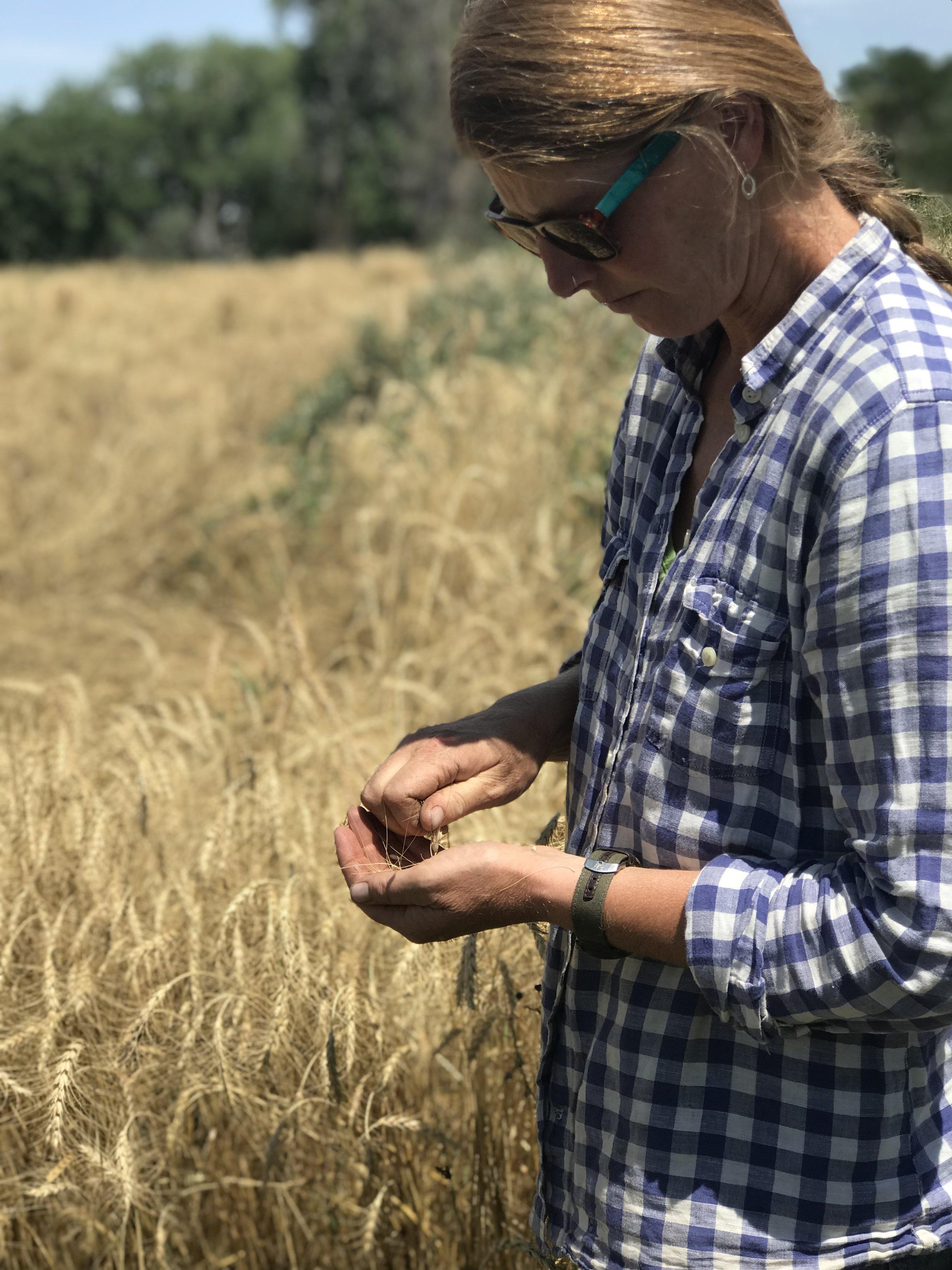 Anne Cure, Cure Farm, Boulder CO