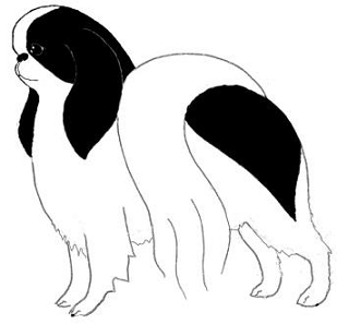 Japanese Chin Club.png