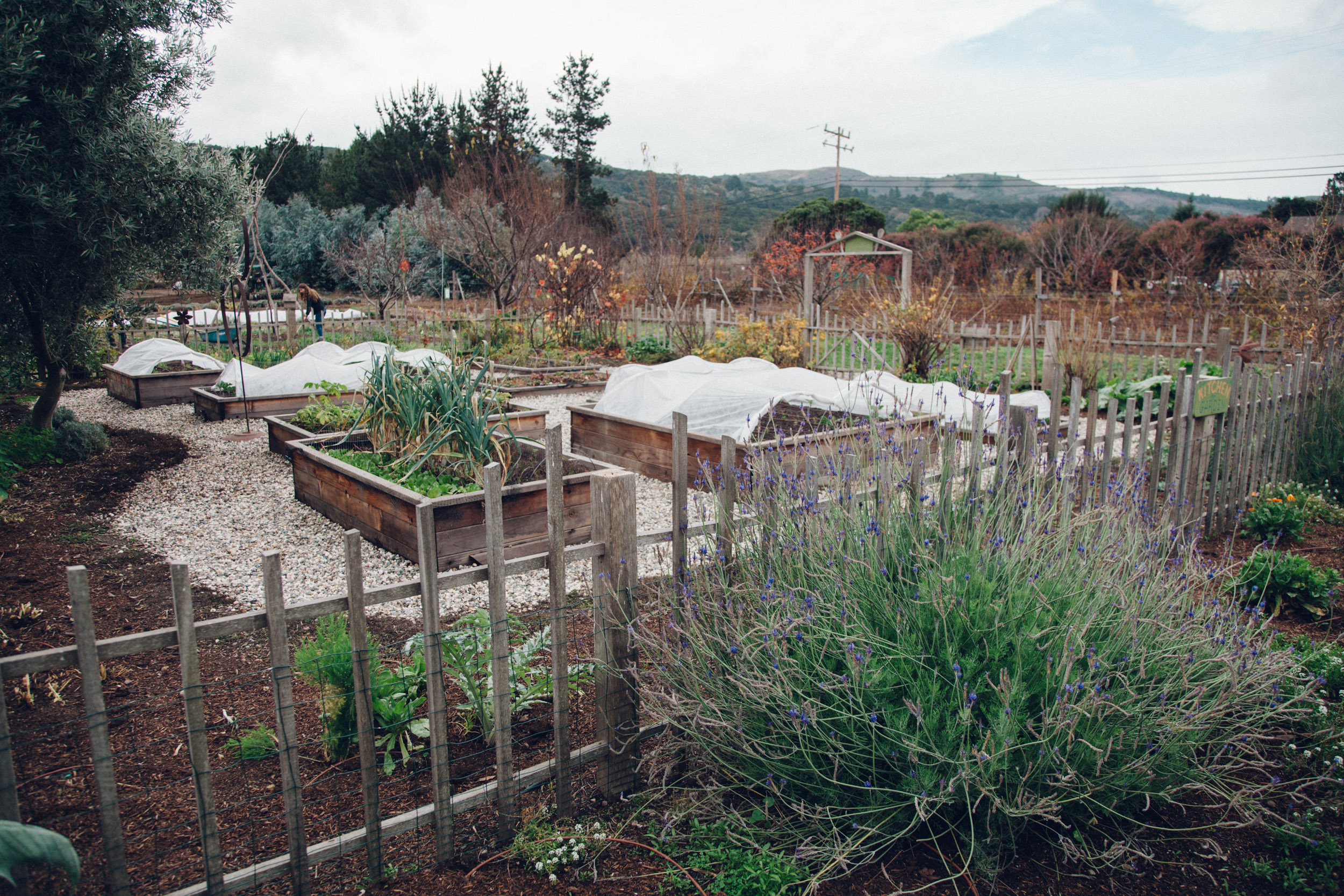 EarthboundFarm,jpg