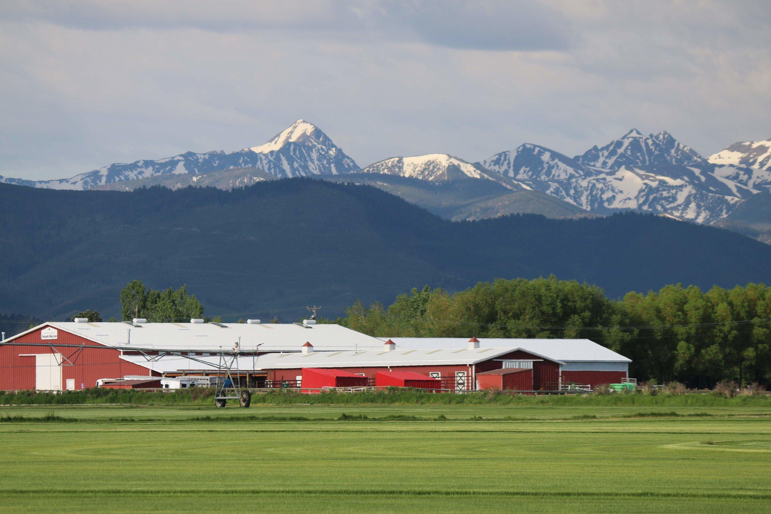 Bozeman Montana sod farm