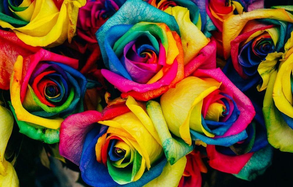 LGBTQ-pexels-photo-28245-lite.jpg