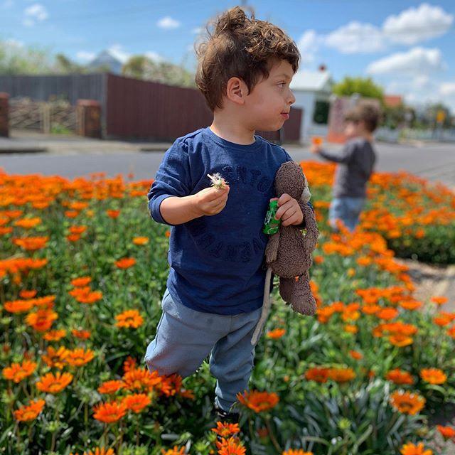 Beautiful Brunswick blooms with my beautiful boys. #flowerpicking