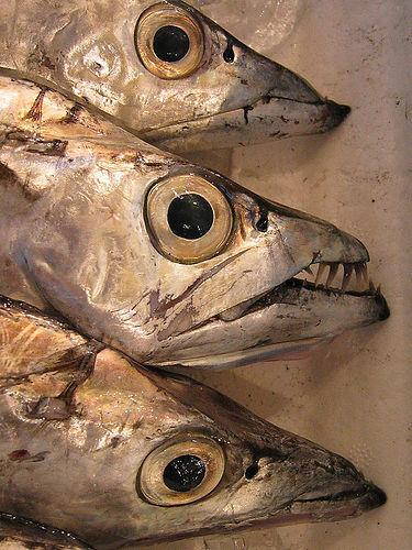 fisheads.jpg