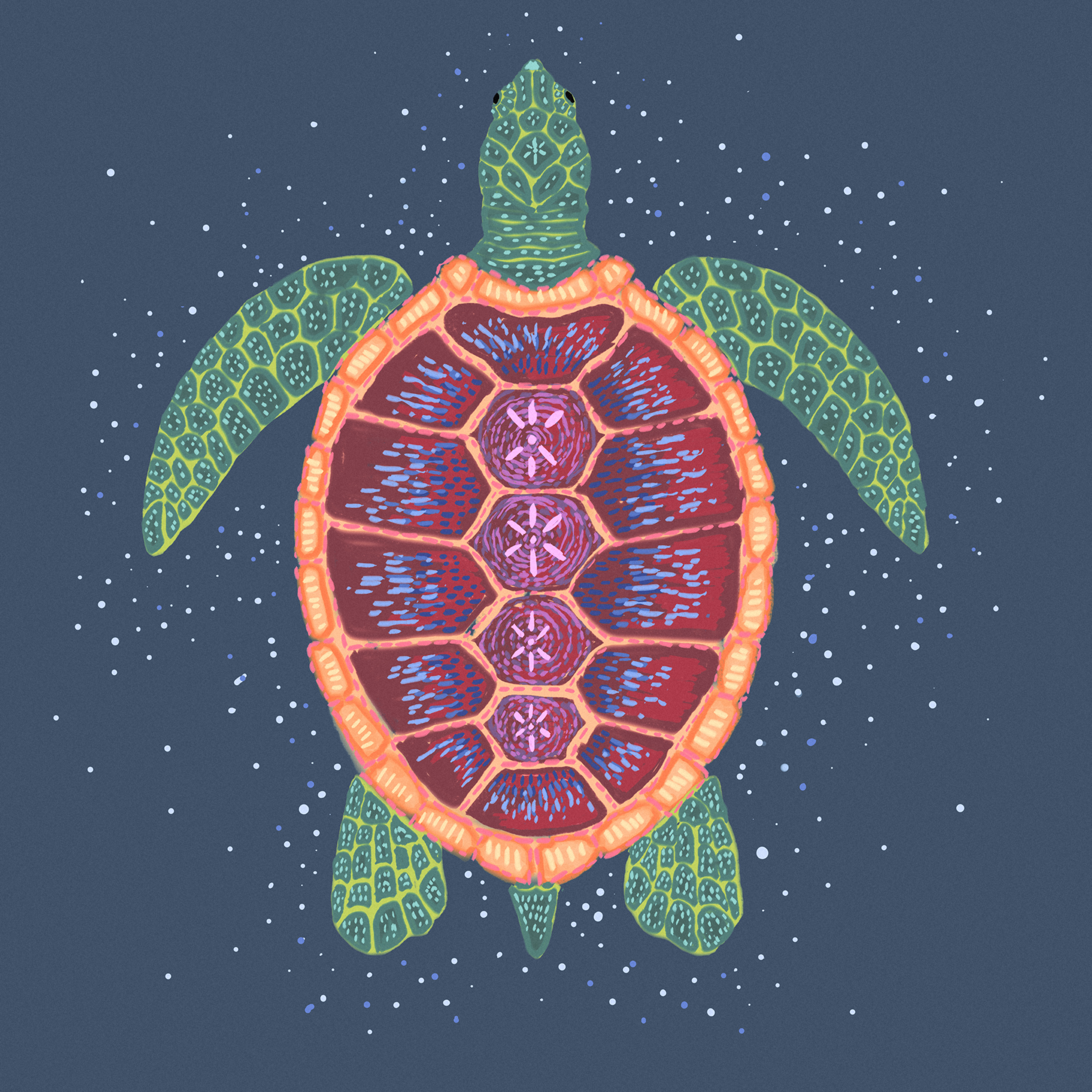 facey turt.png