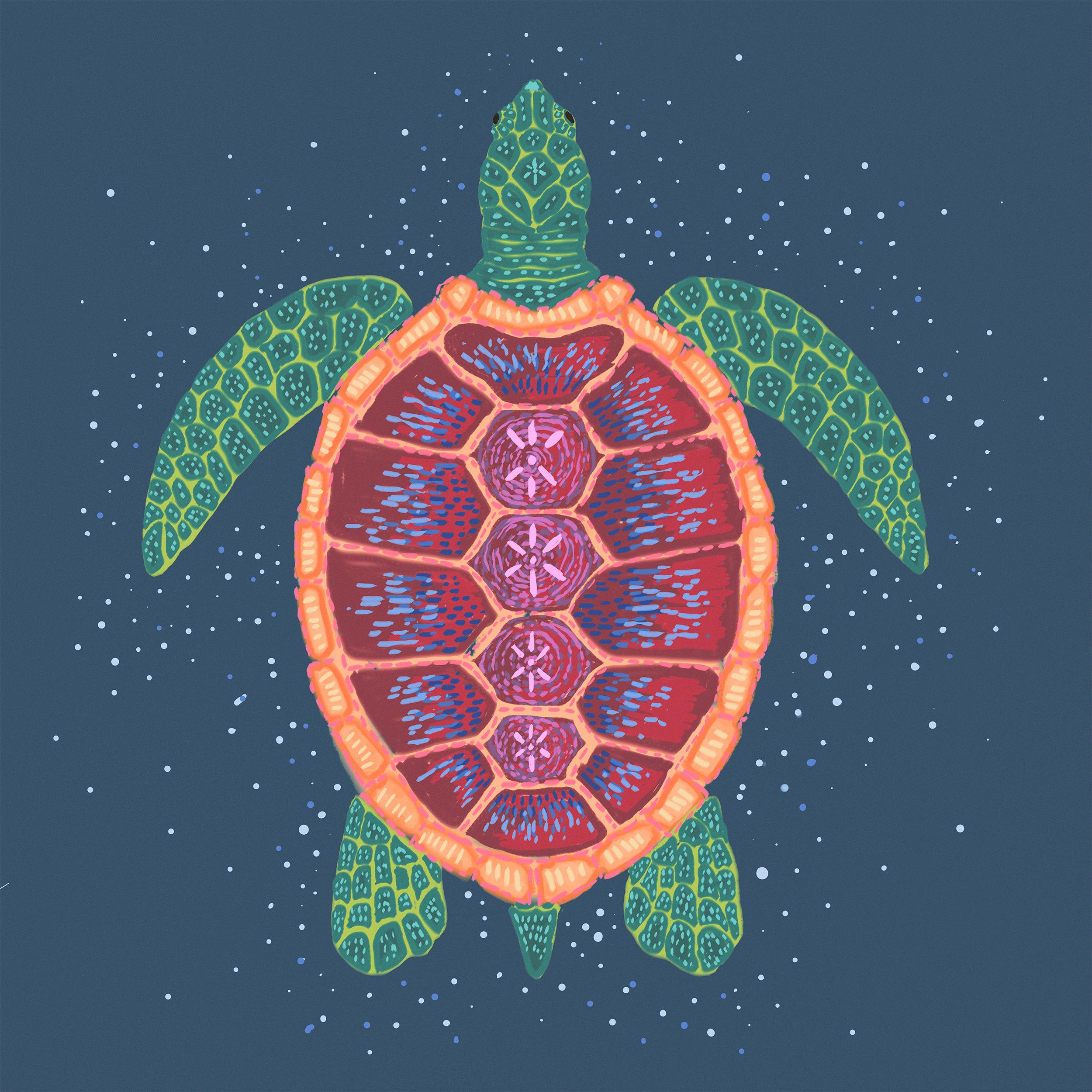 turtle website ready.jpg