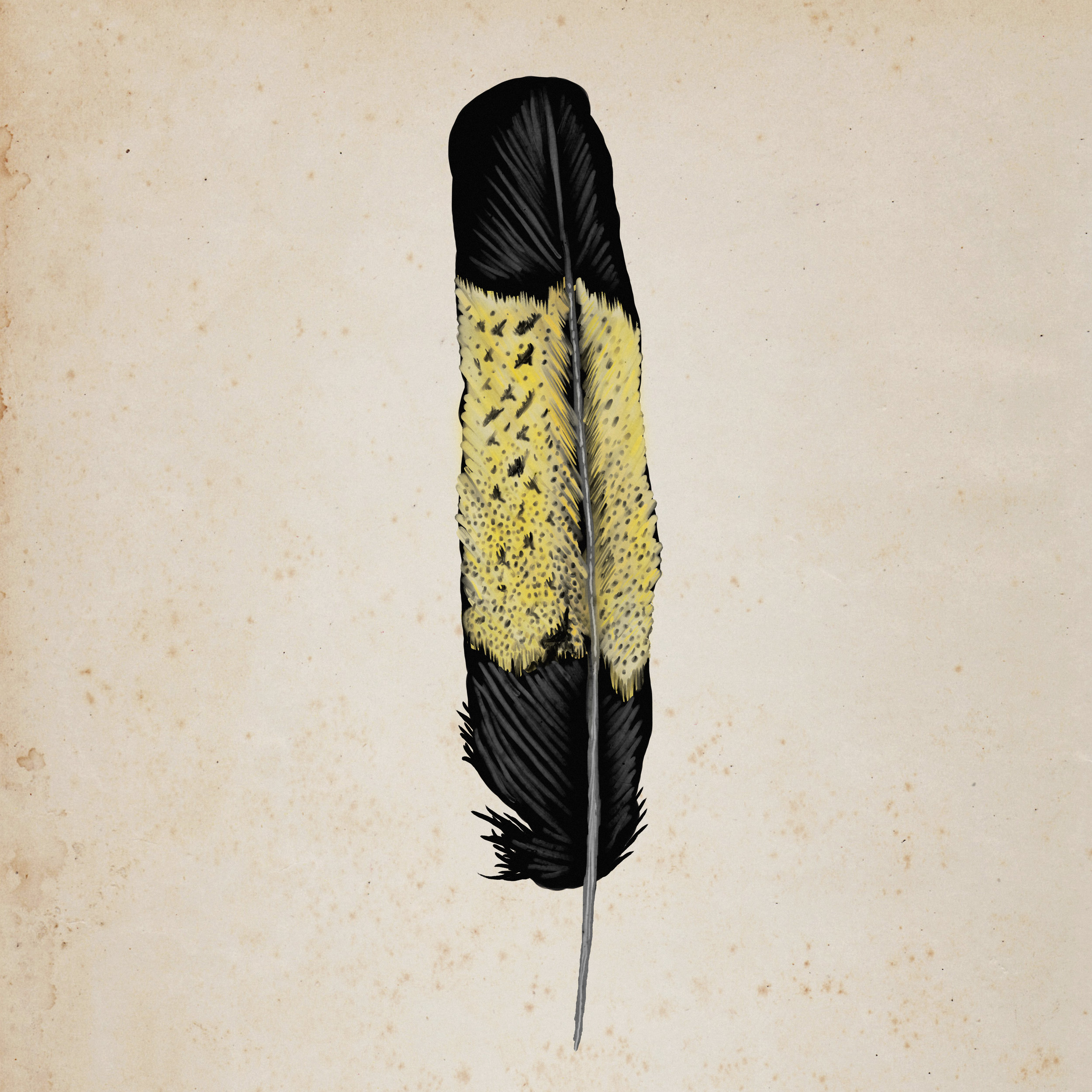 Yellow Tailed Black Cockatoo Feather.jpg