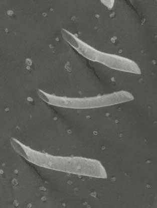First report of lipid-like peptide nanotubes.