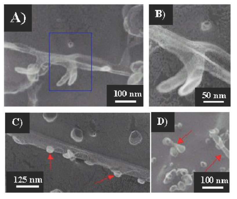 Lipid-like peptide nanotubes.