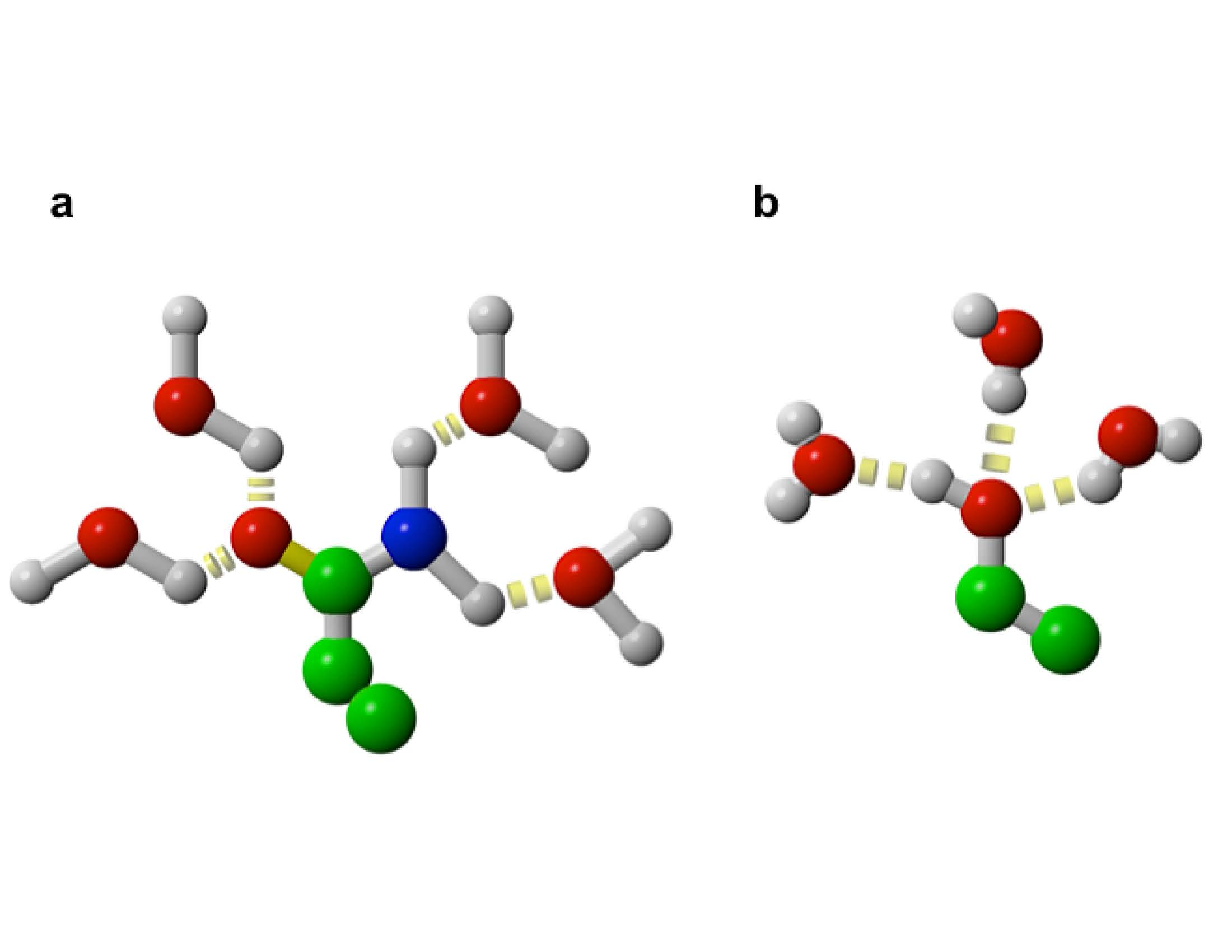 Four water molecules surround the side chains of glutamine and asparagine, and three water molecules surround the side chains of serine, threonine, and tyrosine.