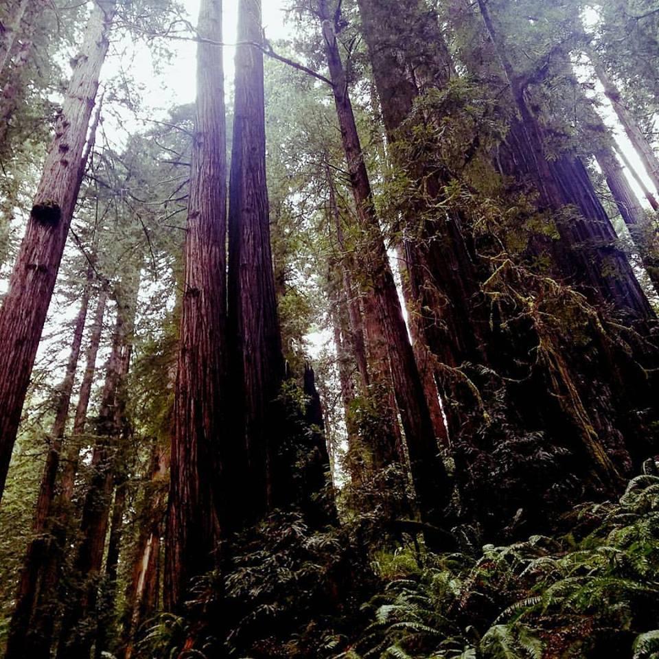 Behind-the-Scenes: Shooting at the Prairie Creek Redwoods State Park in California.