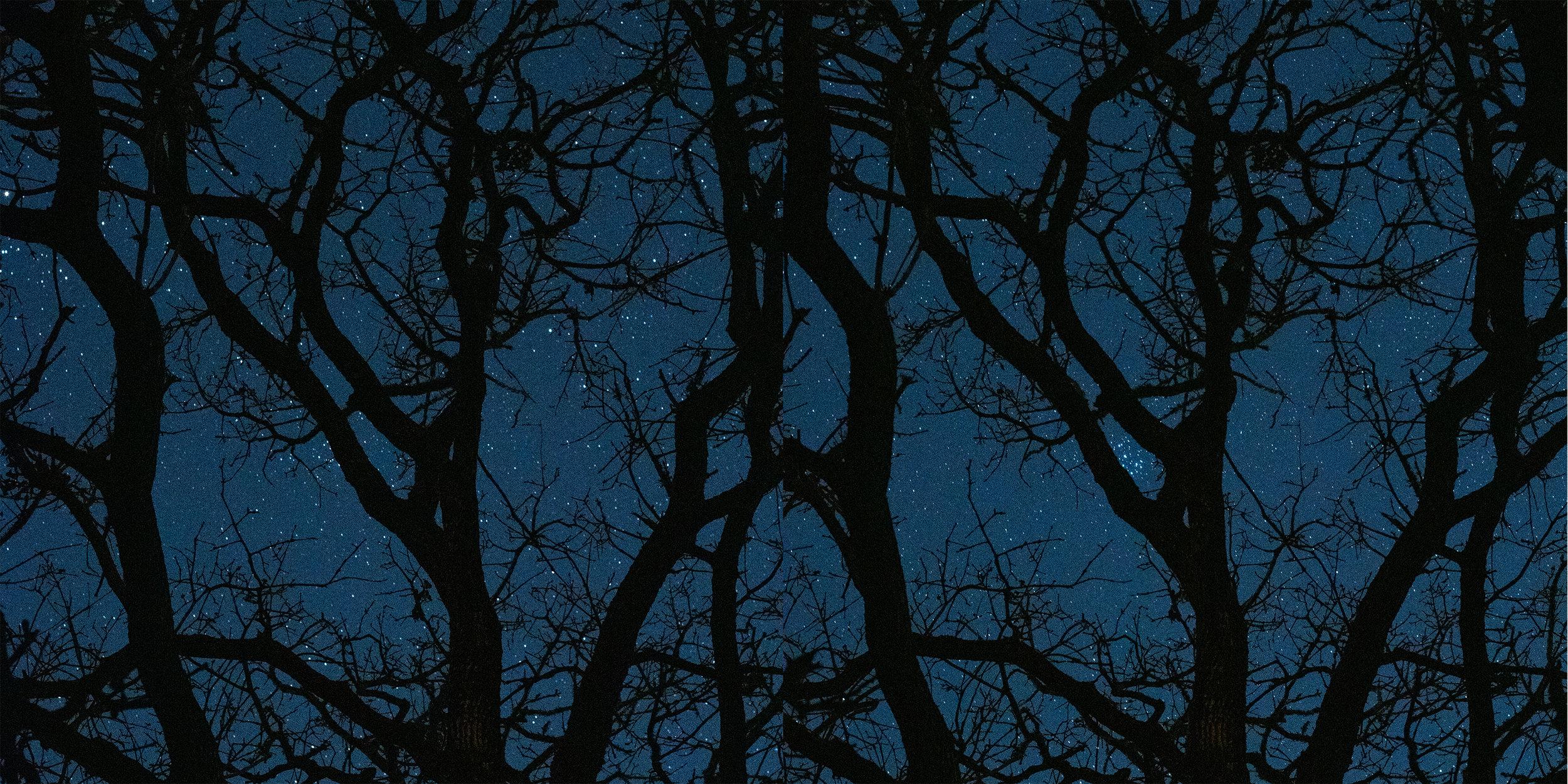 tree and stars.jpg