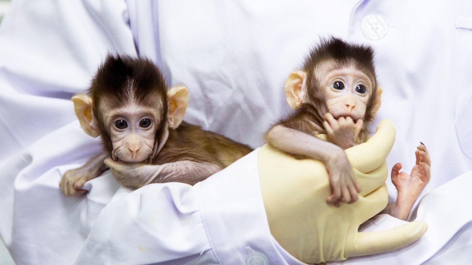 monkey clones.jpg