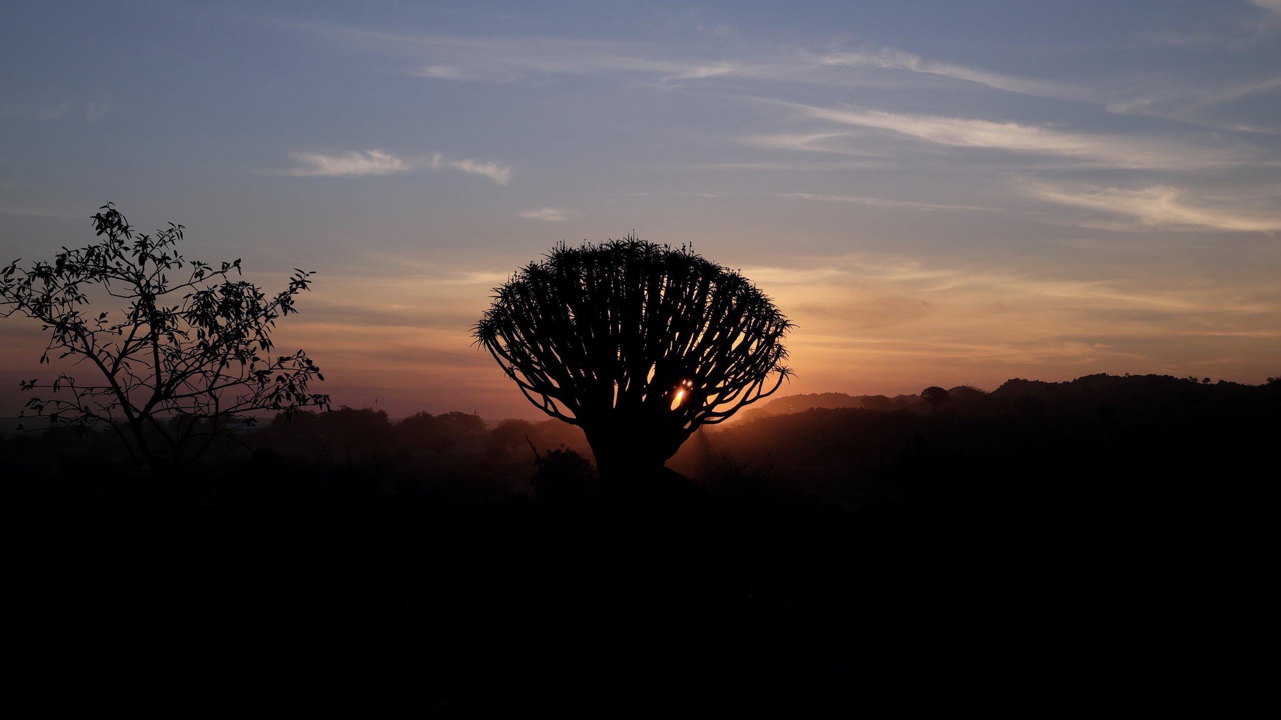 Sunset with Quiver Tree