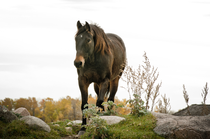 Do you need to board your horse? -