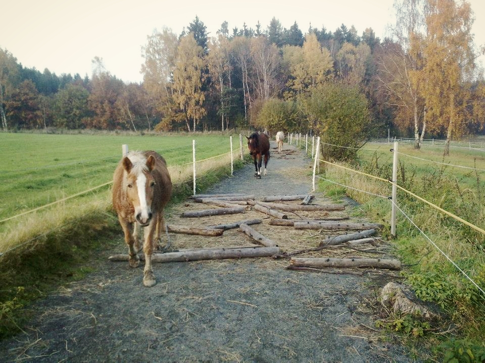 Photo by AANHCP CP Alena Vostatkova from her Paddock Paradise in the Czech Republic. Click for more great info from Horse HIppie blog