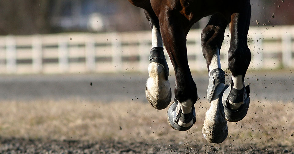 Is your horse shod? - Visit Handy Hay Nets for some ideas to keep your horses safe when using hay nets.