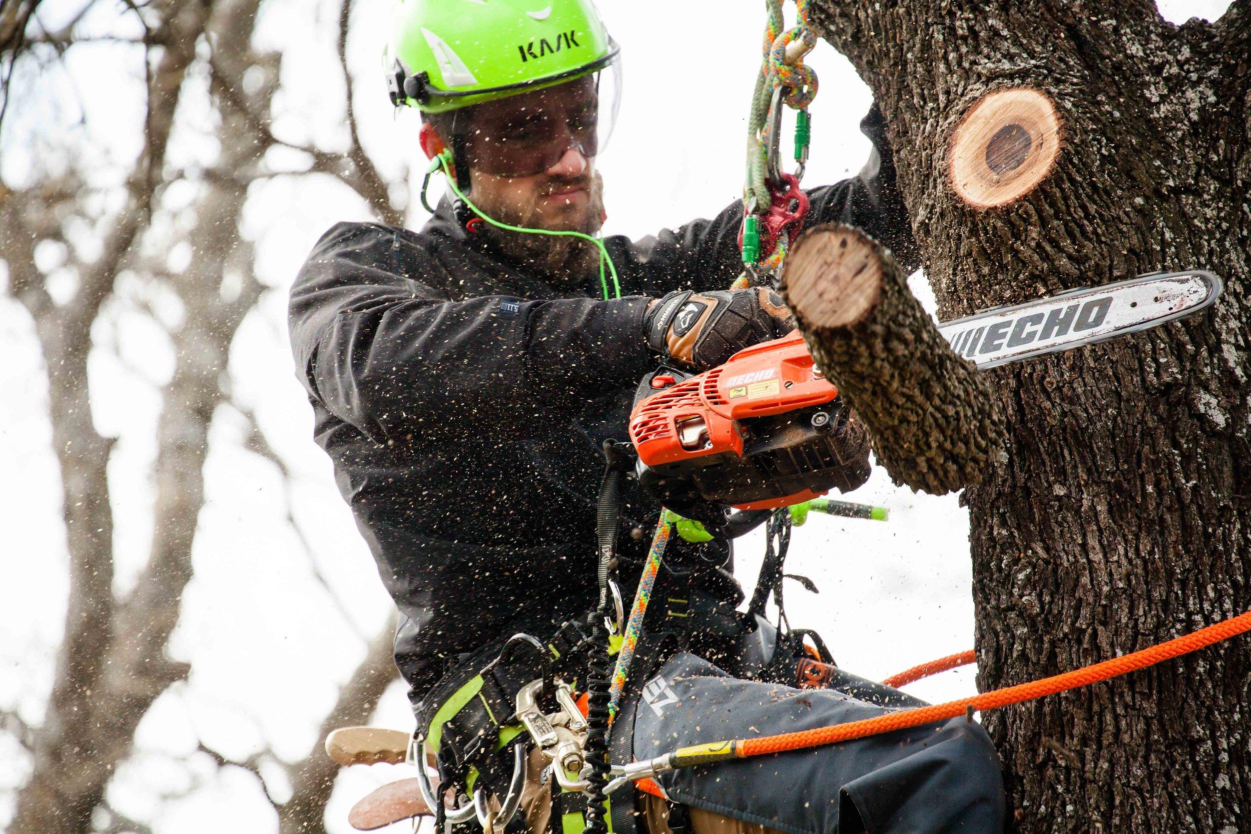 Joe Loomis Texas tree pruning and removal
