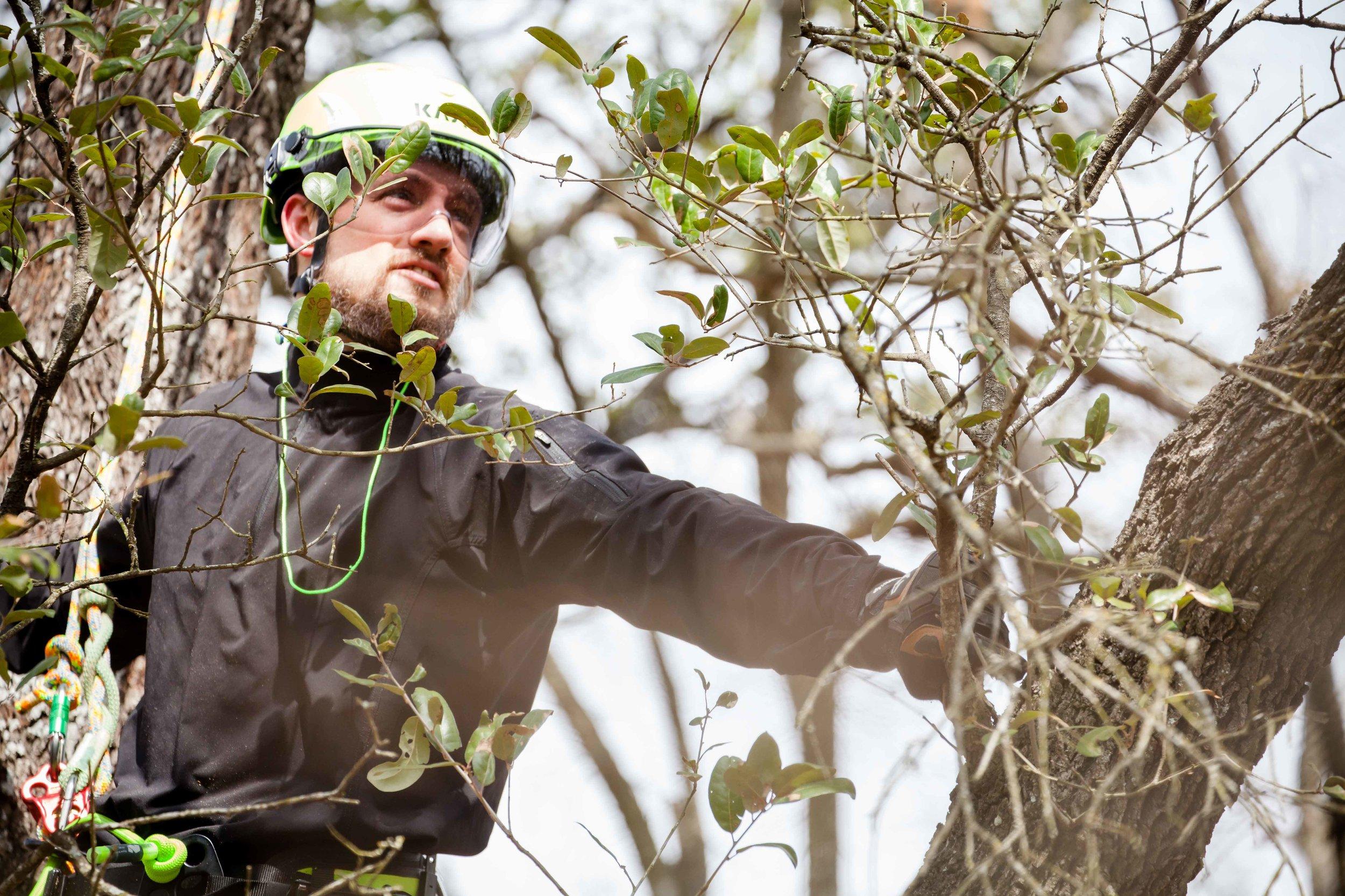 Joe Loomis Texas Arborist
