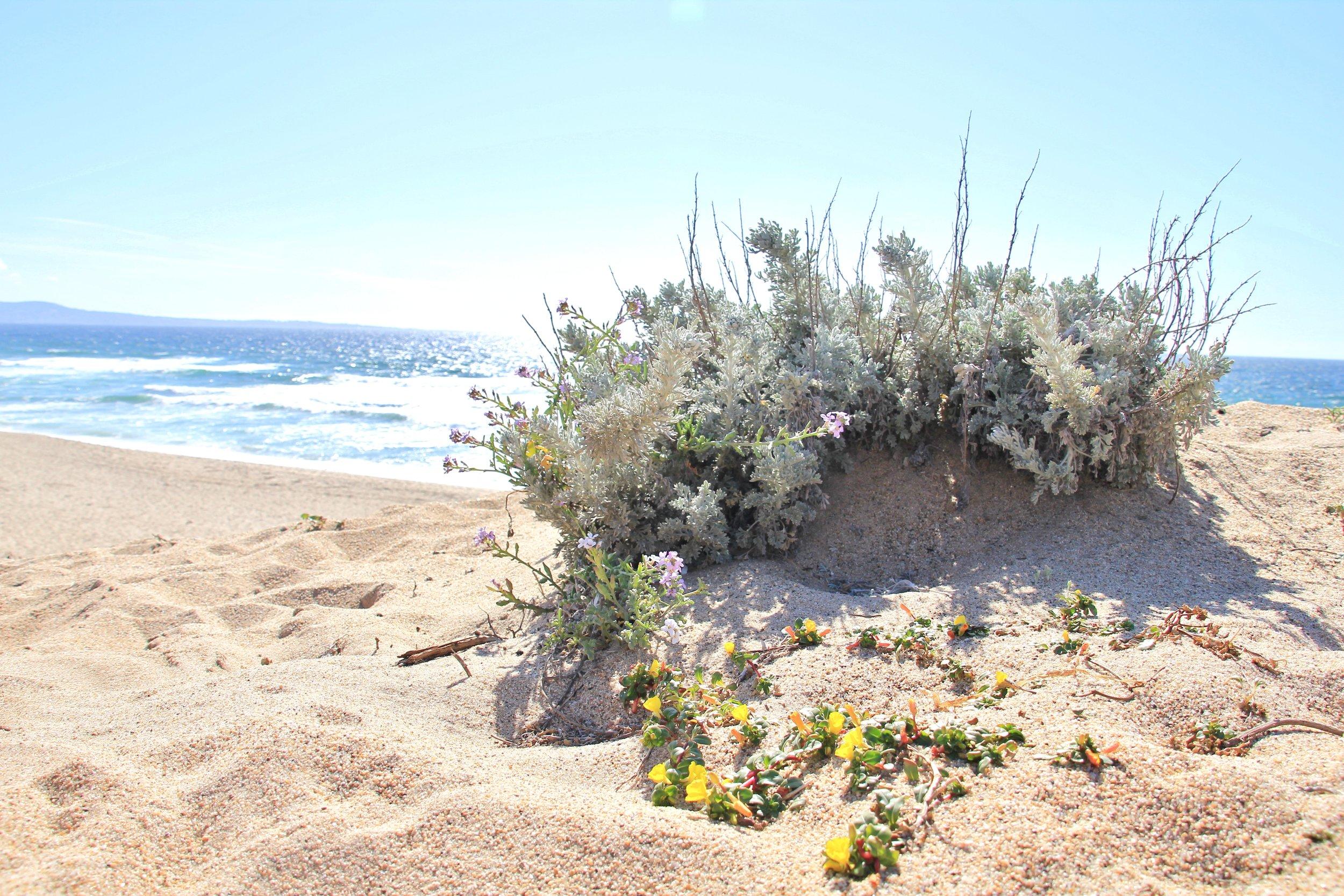 Katzman Beach Day 010.JPG
