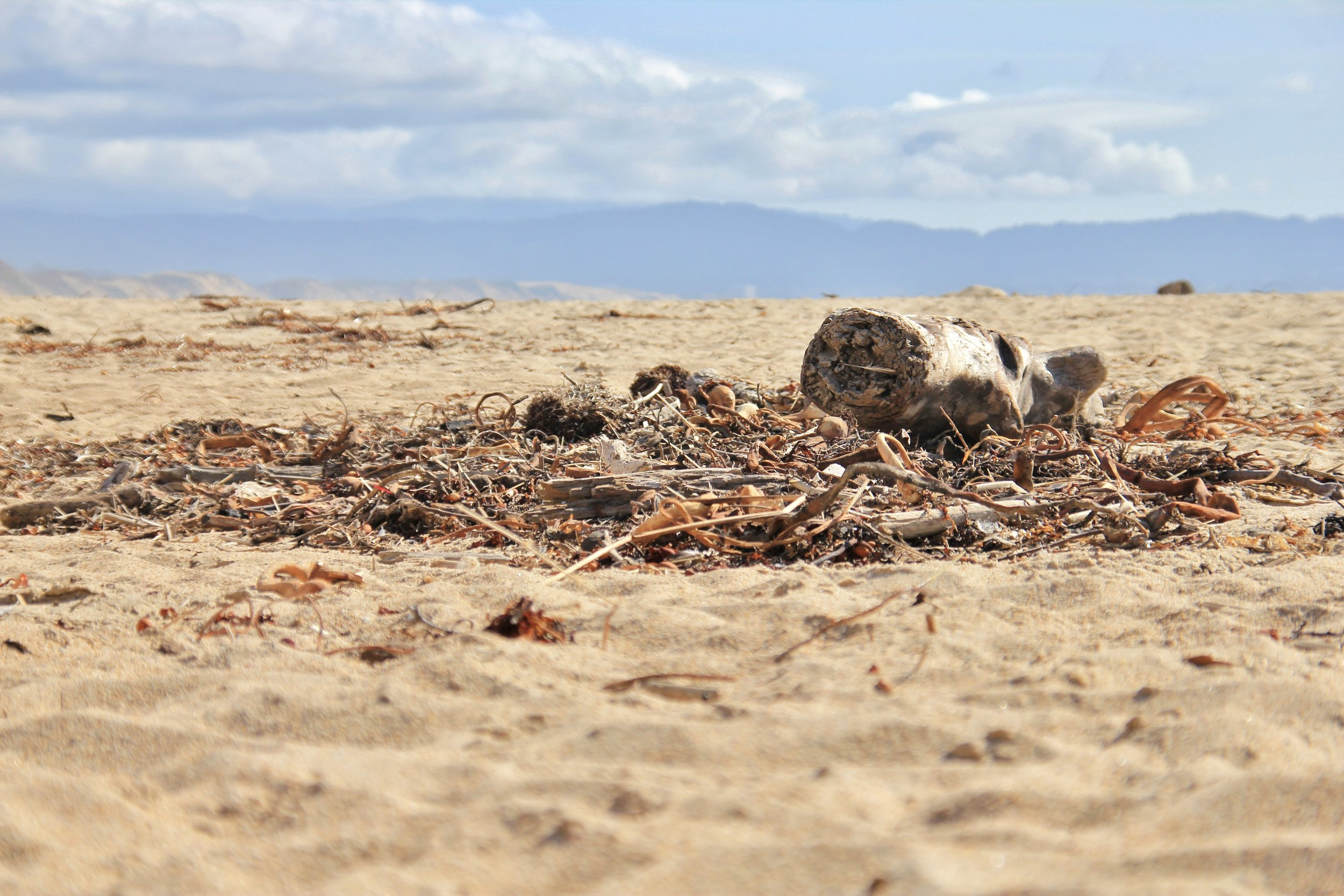 Katzman Beach Day 082.JPG