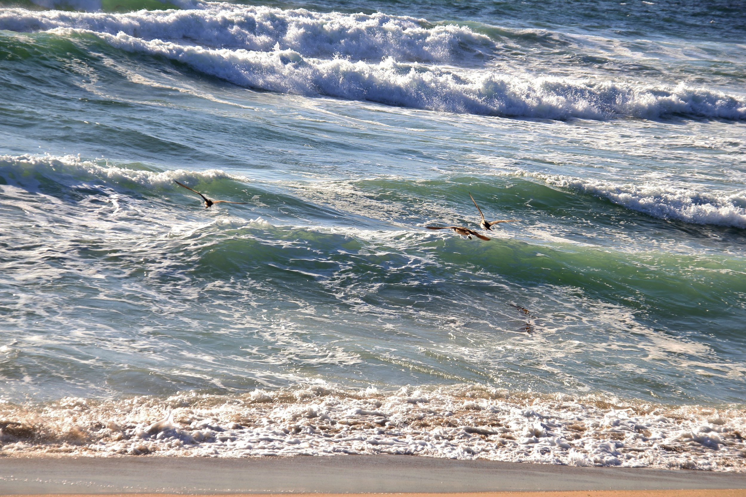 Katzman Beach Day 155.JPG