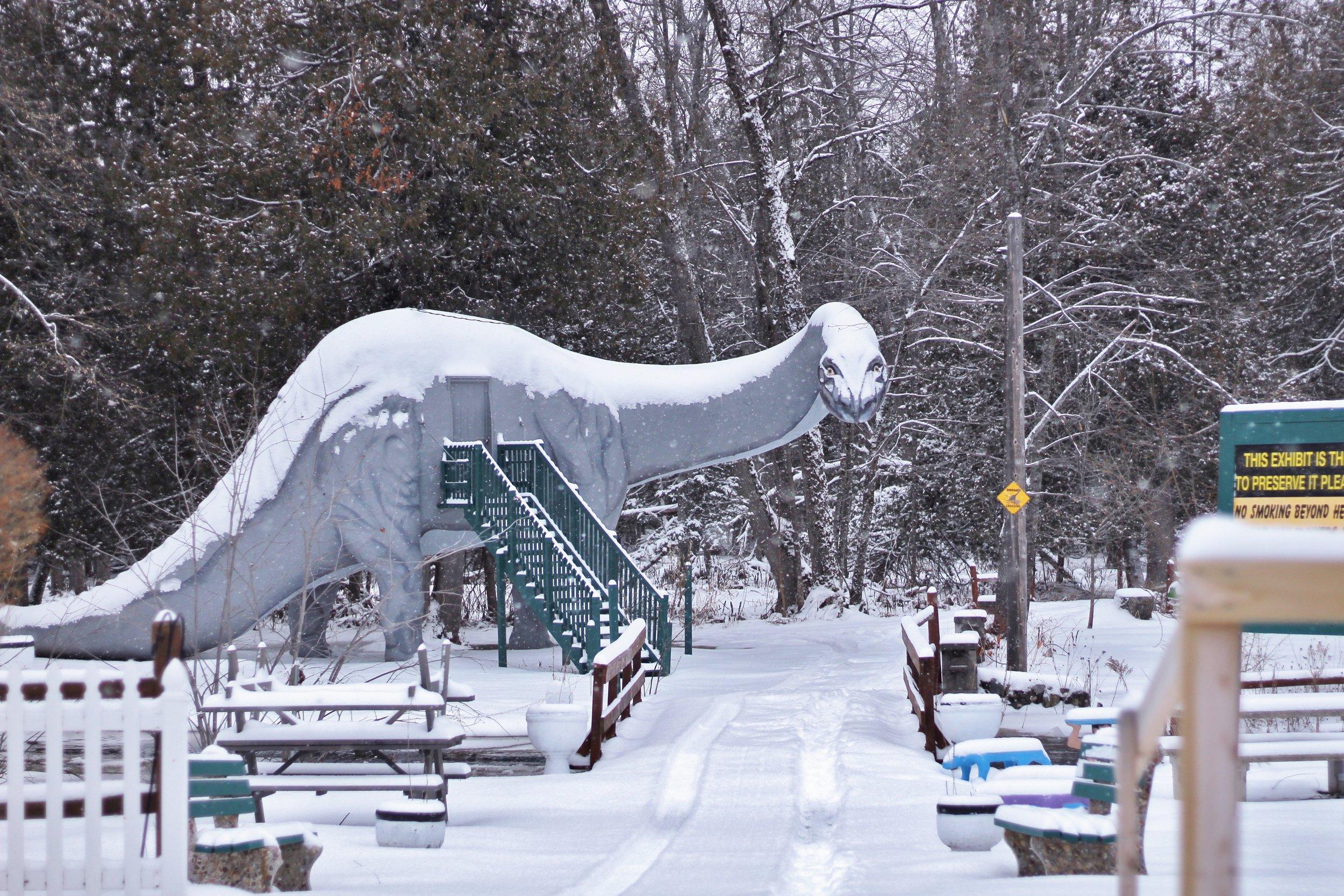 Dinosaur Gardens in the Snow (9).JPG