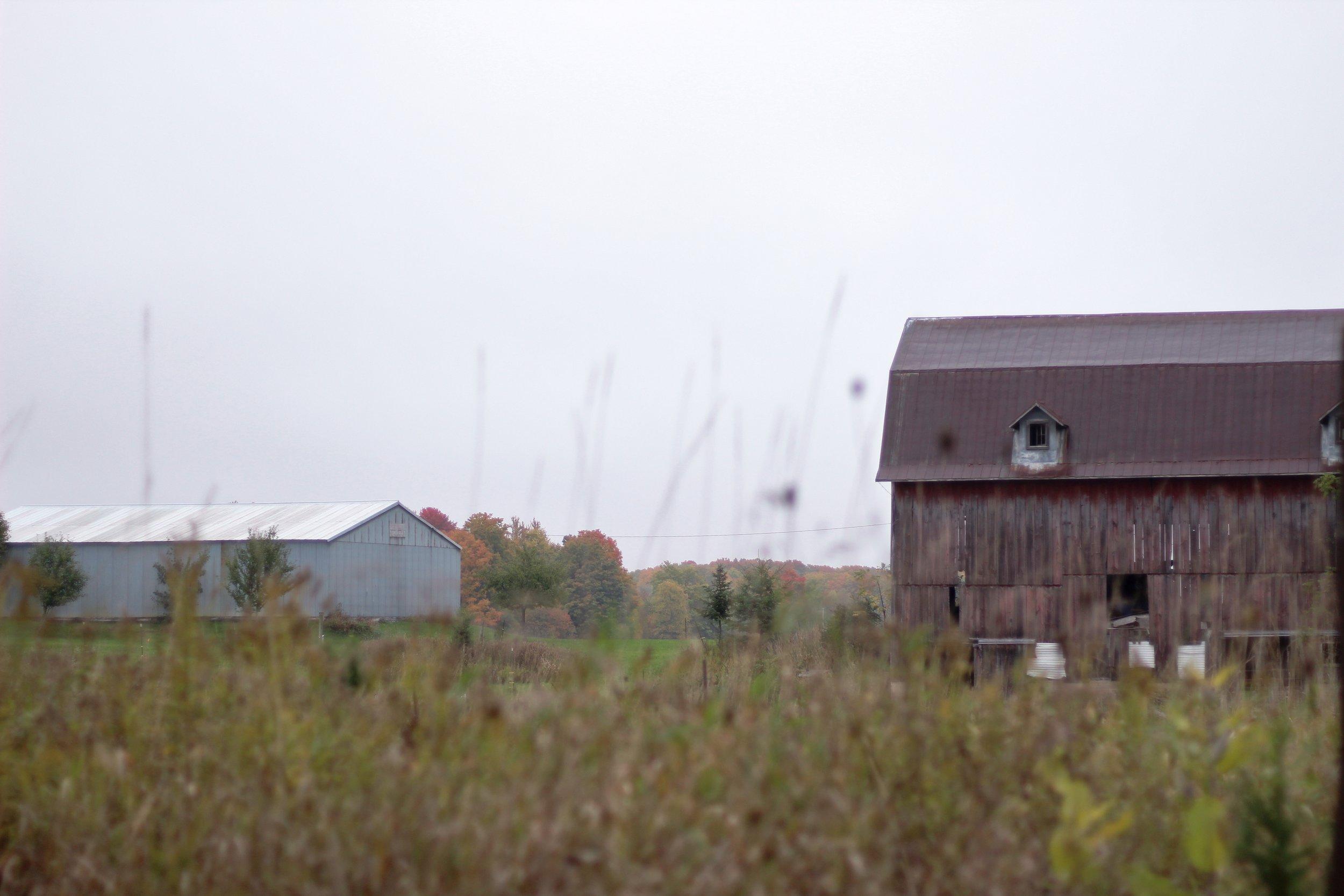 Beth's Family Farm (46).JPG
