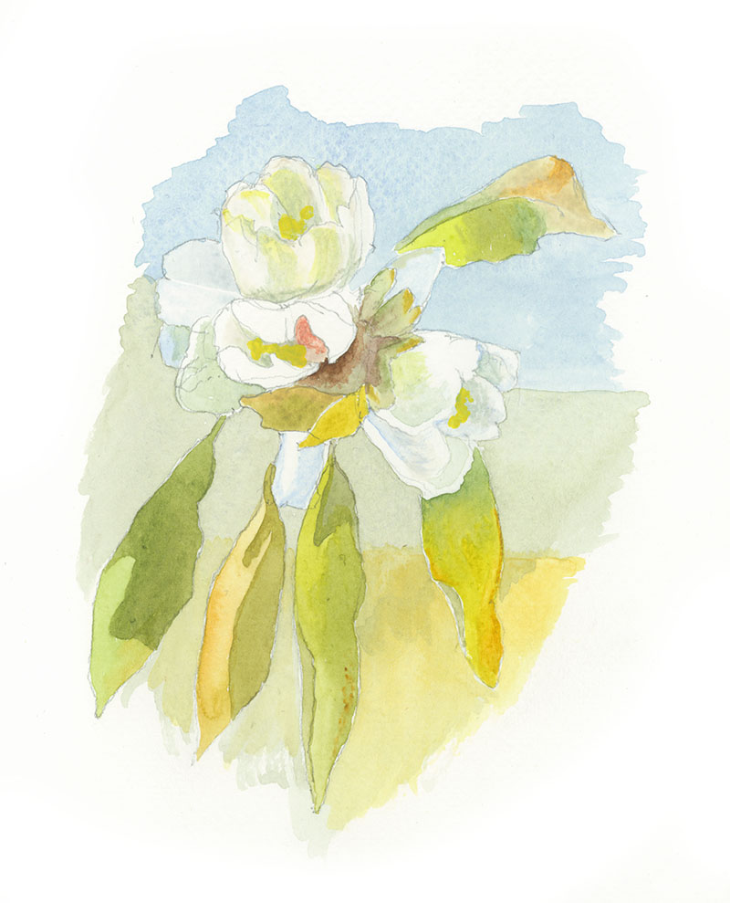 blossom watercolour.jpg