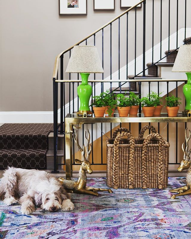I can't take credit for the family pet 💕 #caitlinmoraninteriors #rosie