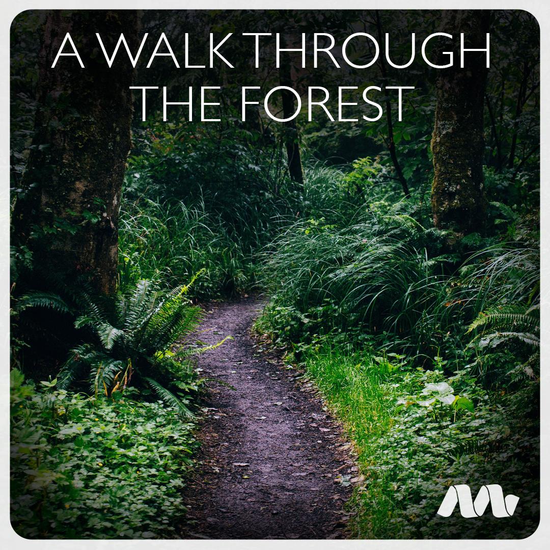 walkthroughtheforest.jpg