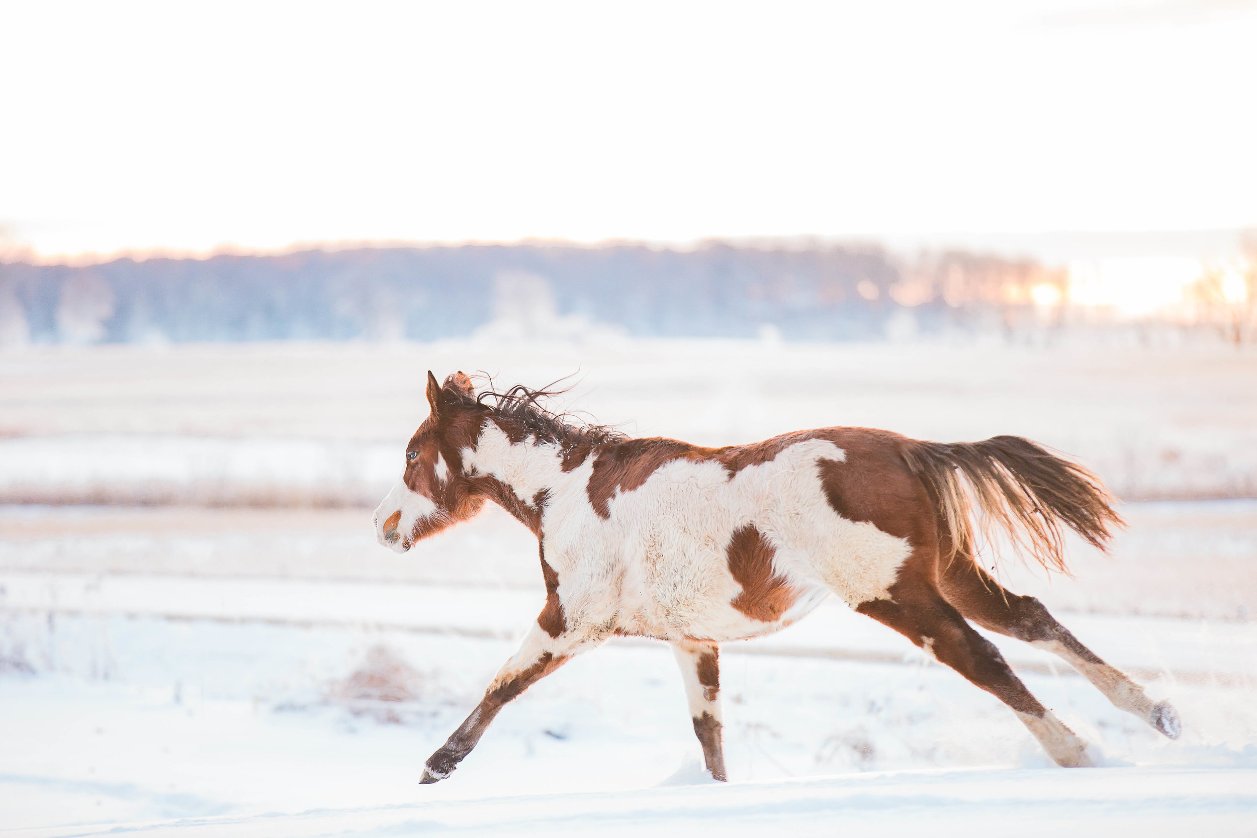 Best Horse Photography Copper Arrow Photography Wisconsin Based Equine Photographer